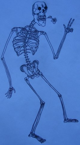 Skeleton by Ryan