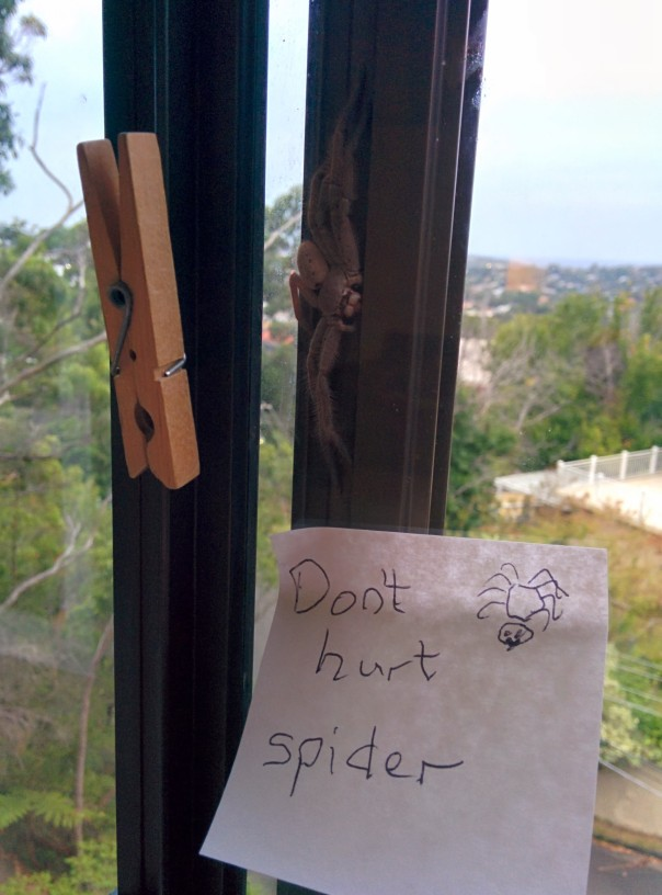 A huntsman spider